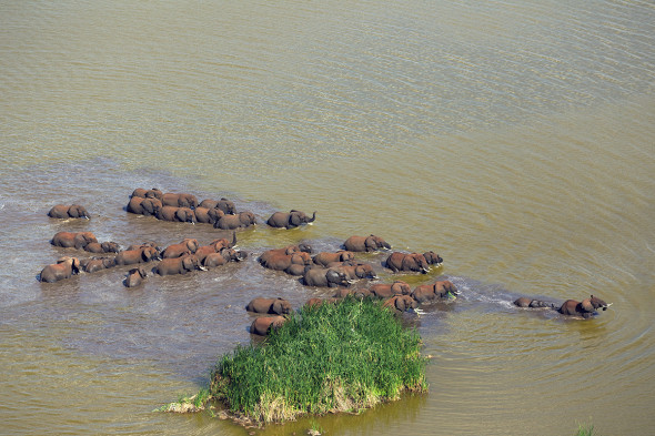 Elephants crossing a river in Tanzania. Photograph by Michael Nichols/National Geographic Creative A herd of Elephants crosses lake Jipi in Tsavo west to reach human crops and feeding in Tanzania