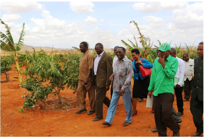 Retiring Prime Minister Mizengo Kayanza Peter Pinda Takes members of Tanzania's Bee-Keepers Society (TABETO) for a visit into his 'bee-keeping farm' in Dodoma, Central Tanzania in October, 2015. Photo Credit: Robert Okanda of The Daily News.
